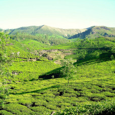 Tea Gardens of Eastern Nepal | Educational Tour - 14 Days